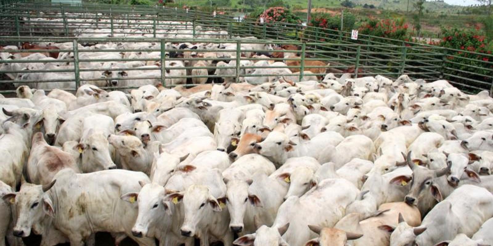 Setor de bovinos apurou queda de 13,1% nos abates