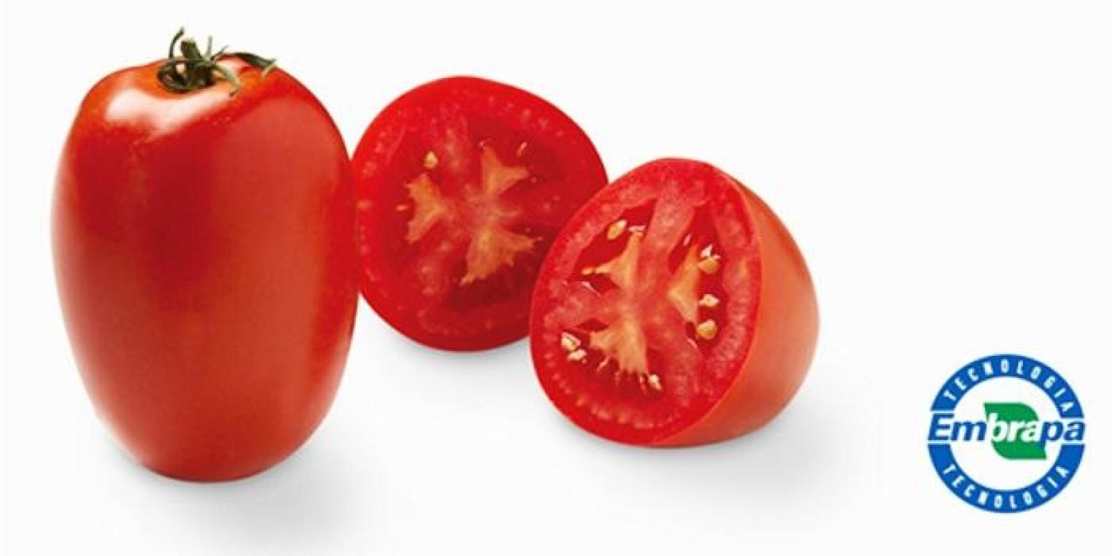 Hortitec 2017: tomates enriquecidos com licopeno são destaques da Embrapa