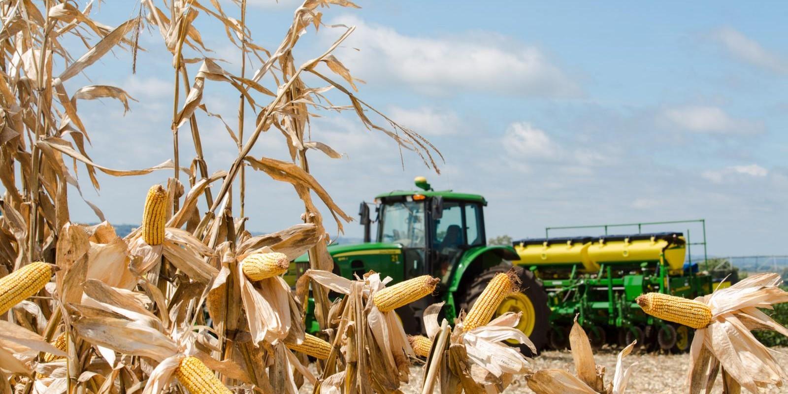 Safra de milho do Brasil deve superar 100 mi t pela 1ª vez, prevê Banco Pine