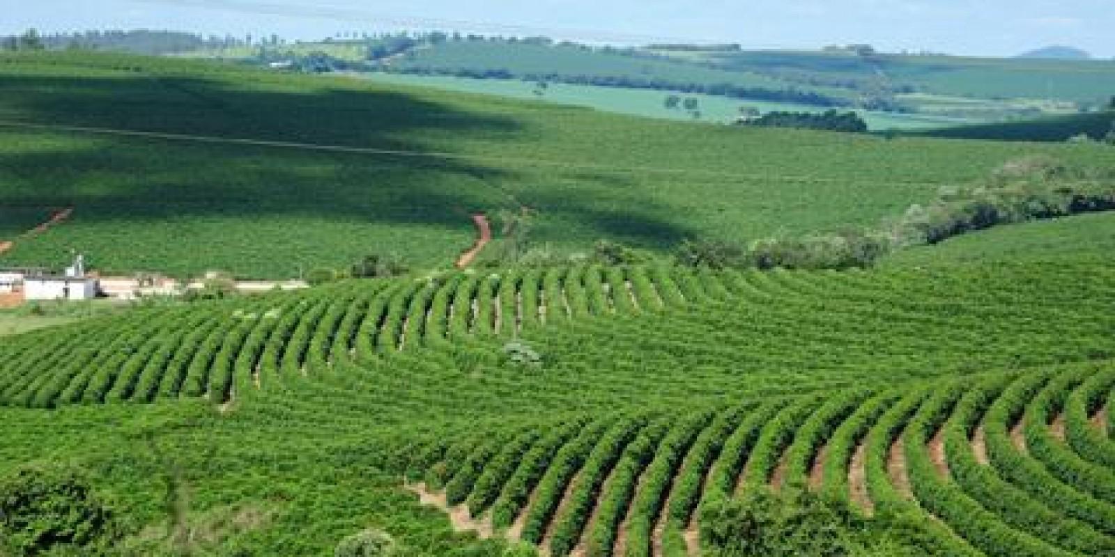 IMA entrega na próxima segunda-feira, 24 de julho, certificados internacionais da UTZ para produtores de café de Minas