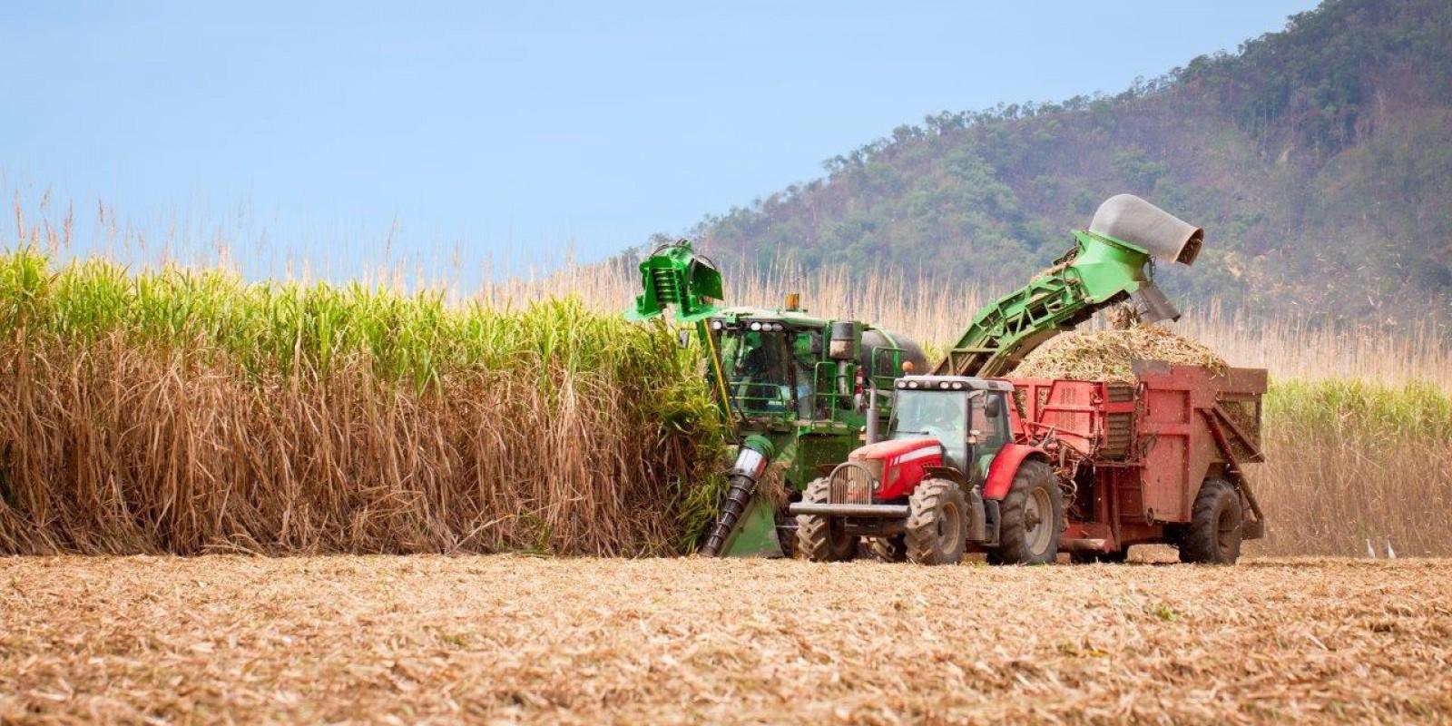 Usina Coruripe anuncia aumento do plantio de cana-de-açúcar em Paranaíba