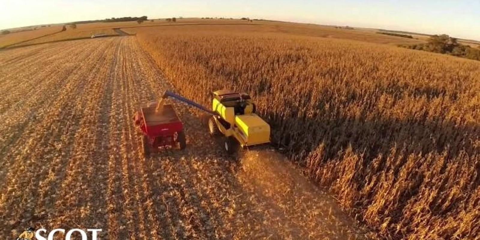 Desenvolvimento das lavouras de soja e milho no Paraná