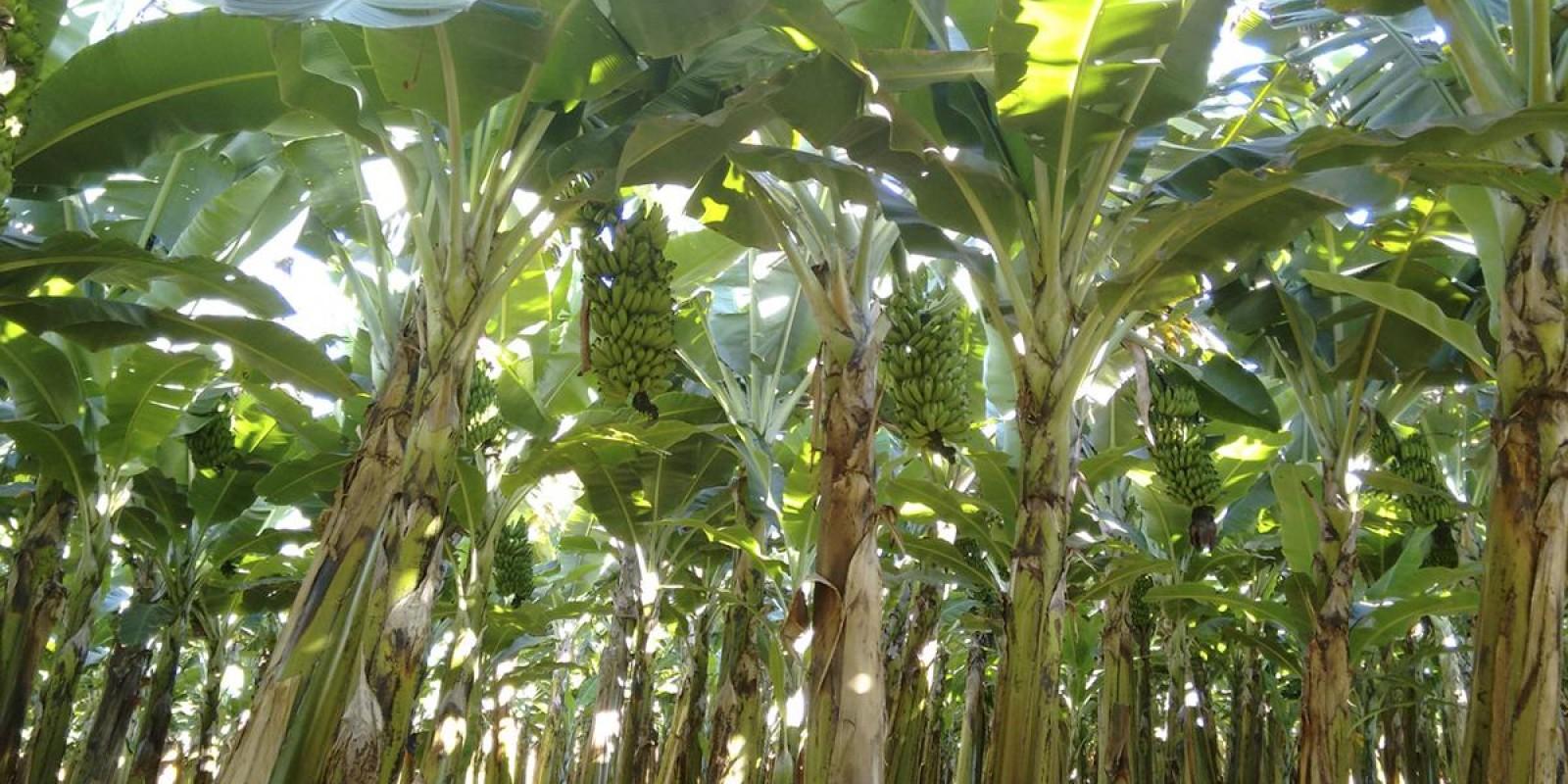Circuito Frutificaminas, série de eventos que debate a fruticultura no Estado começa em março