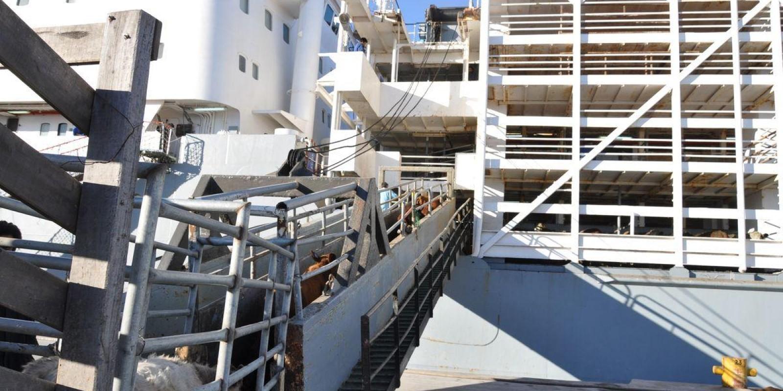 Deputado quer proibir gado vivo em navios no Estado de SP