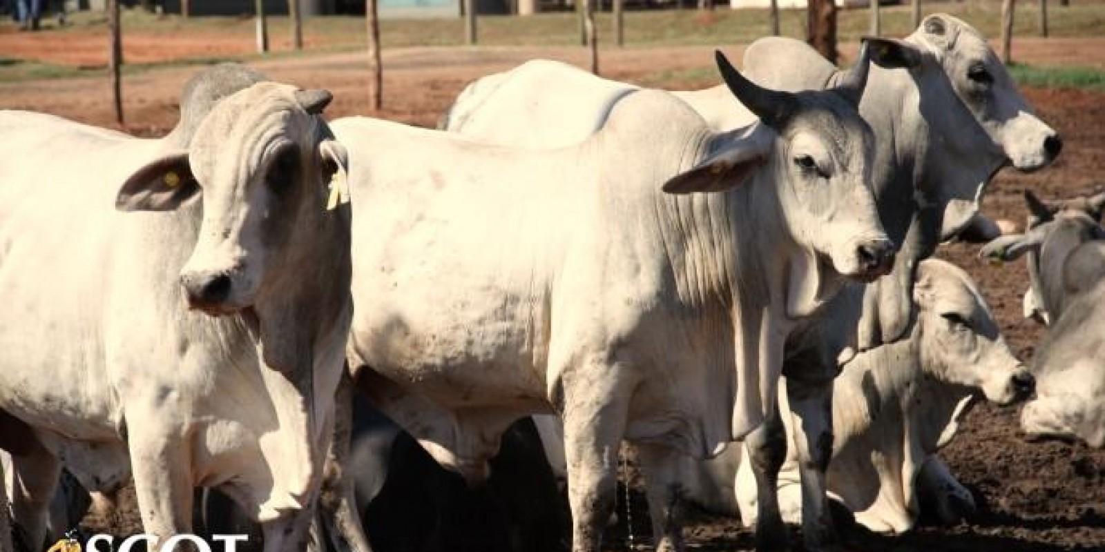 Atenção à demanda por carne bovina