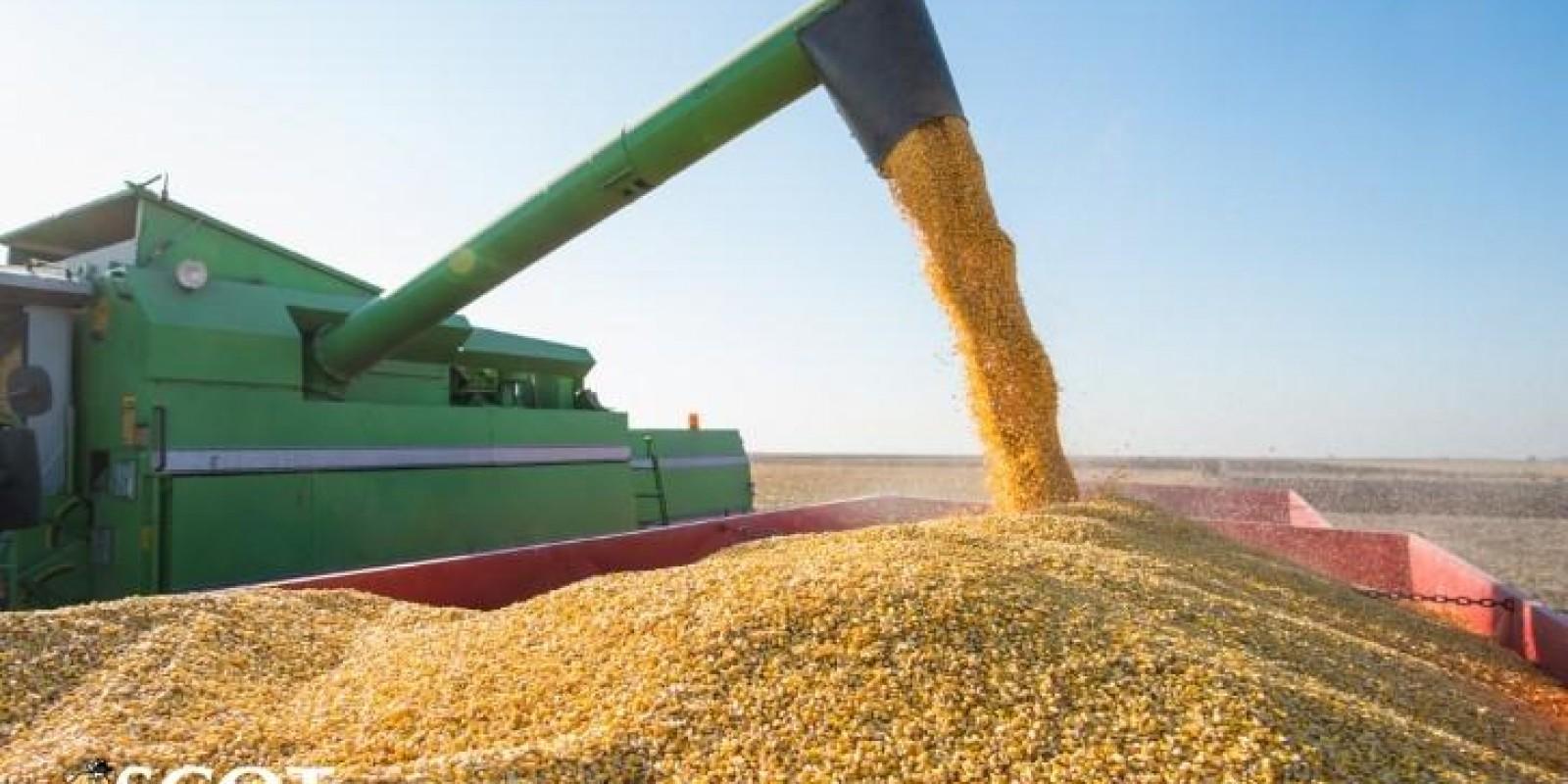 Panorama da colheita do milho e da soja na Argentina