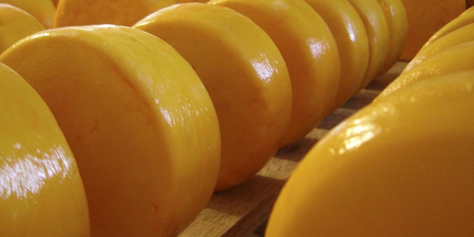 Governo de Minas libera recursos para a pesquisa na área de queijos artesanais