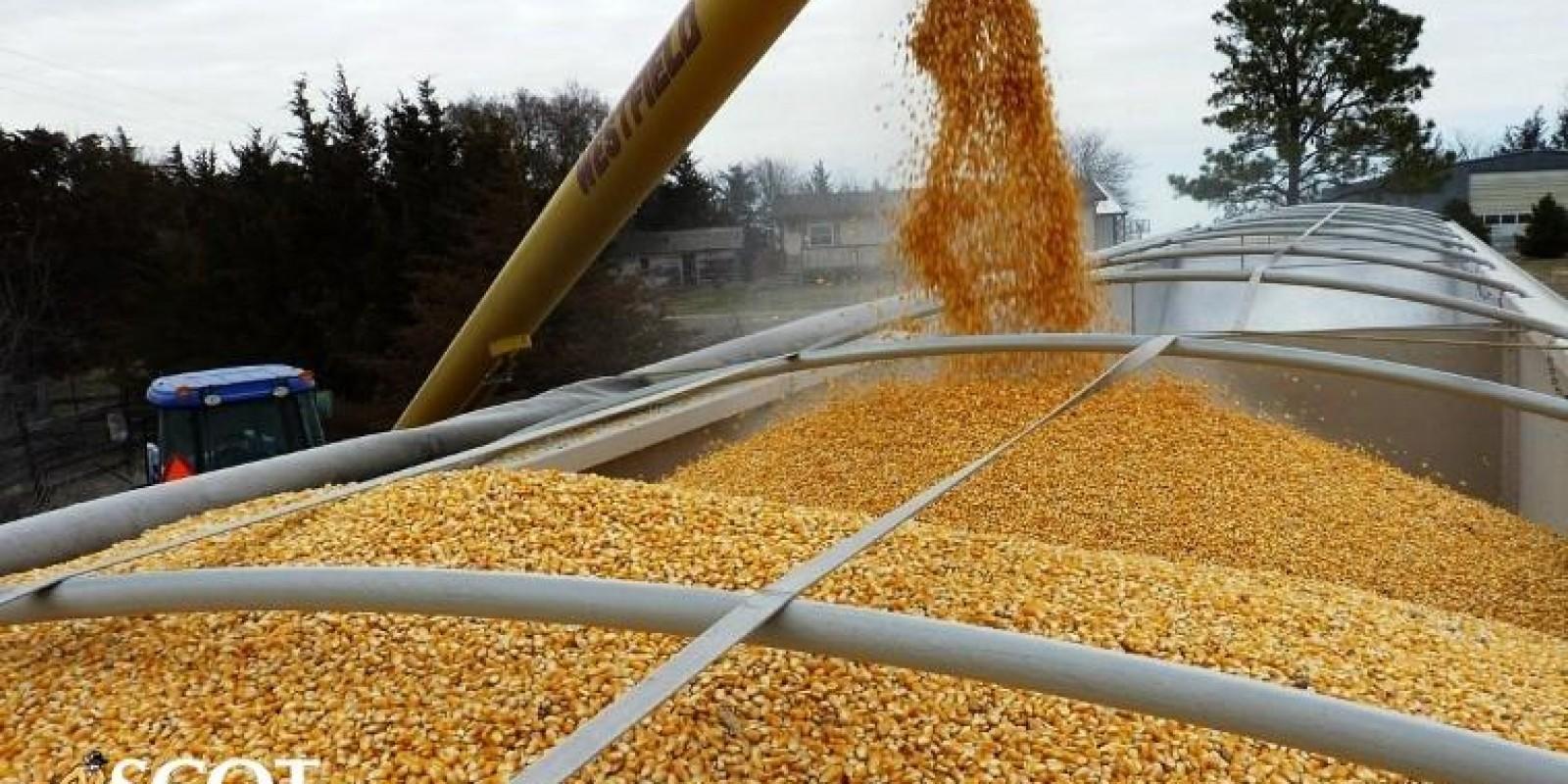 Preço de milho em alta