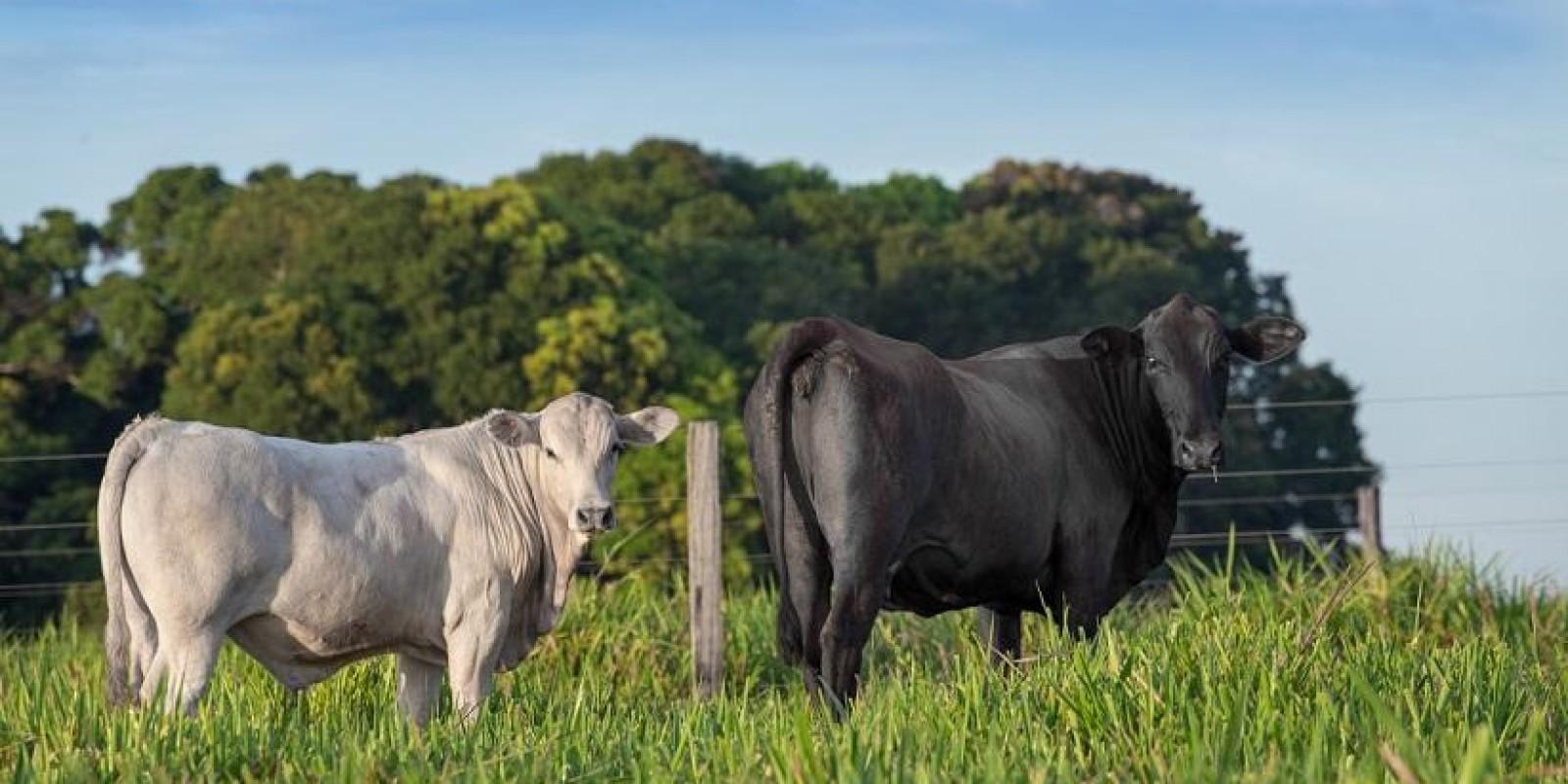Produtividade e agregação de valor são aliadas em nova linha de carnes premium