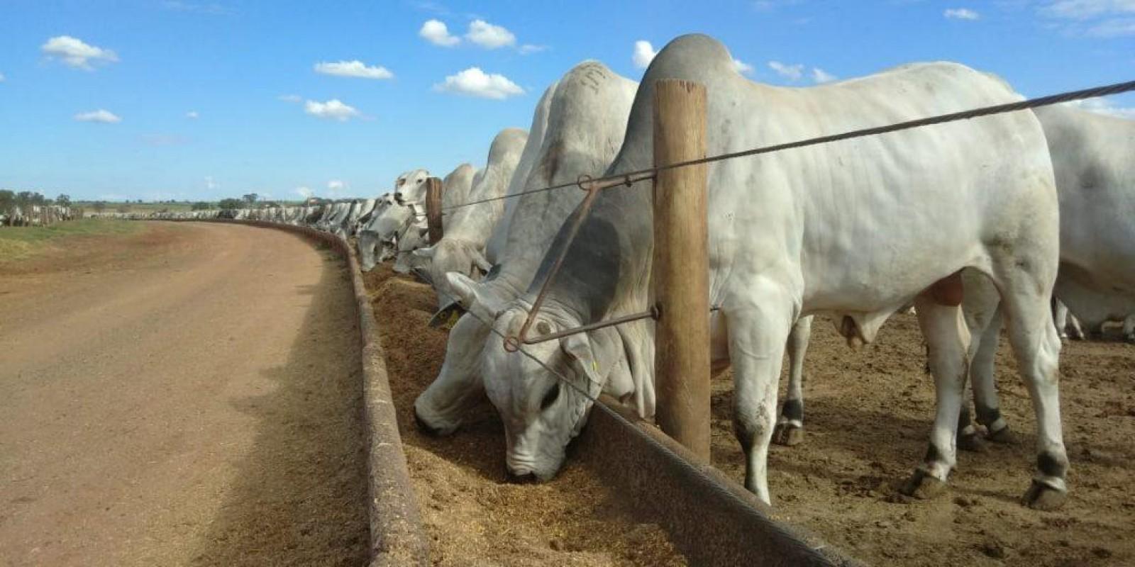 Cinco vantagens para o pecuarista que engorda seu gado em boitel