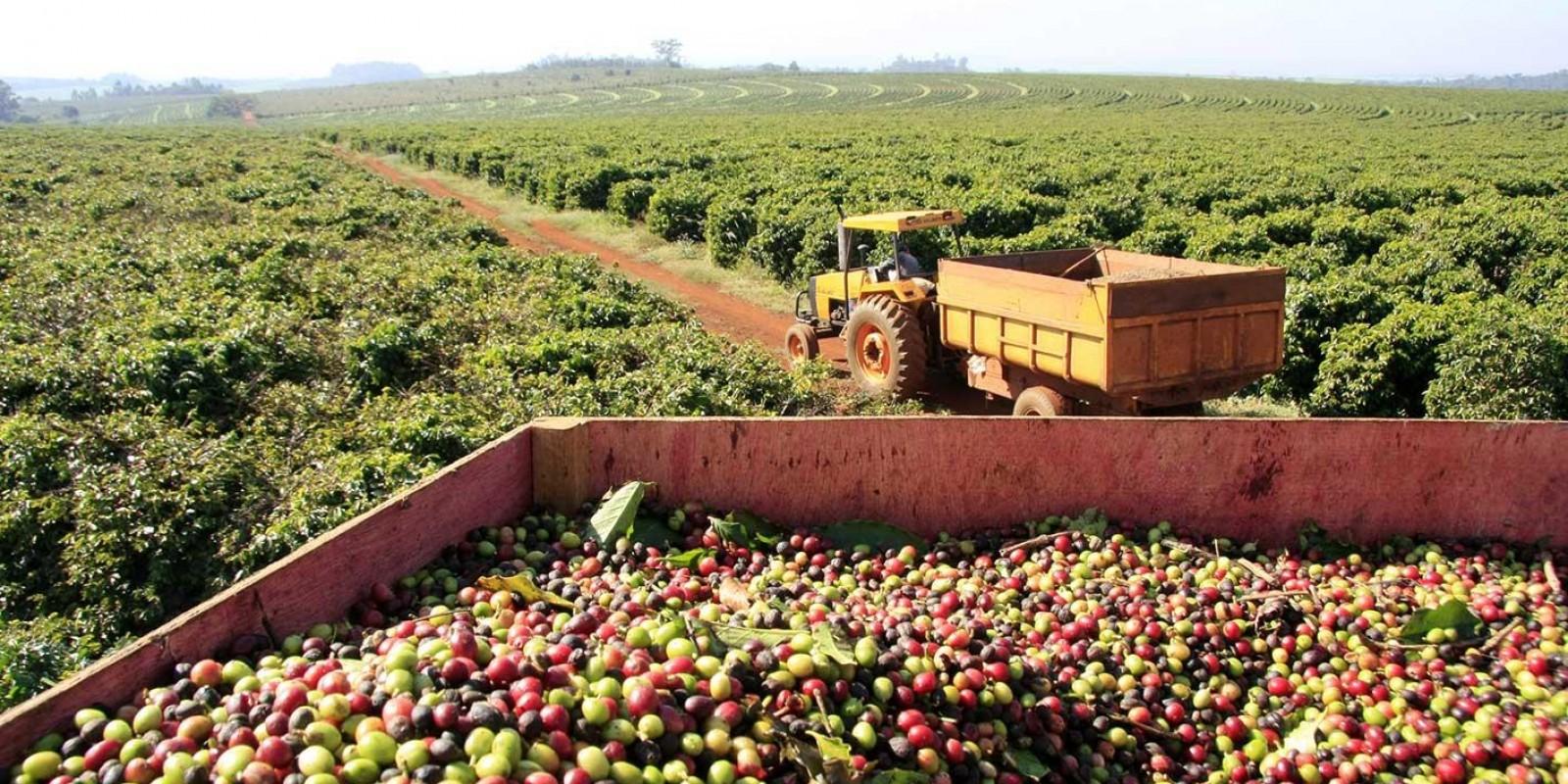 Embarque de café verde do país cresce 27,5% em julho apesar de problemas com navios