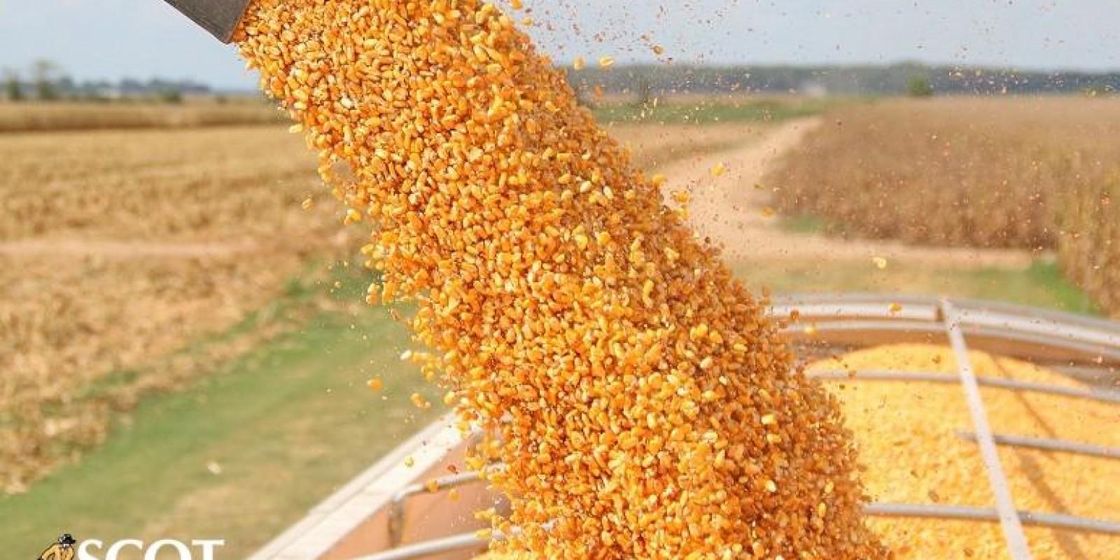 Exportação de milho ganha força, mas segue abaixo na comparação anual
