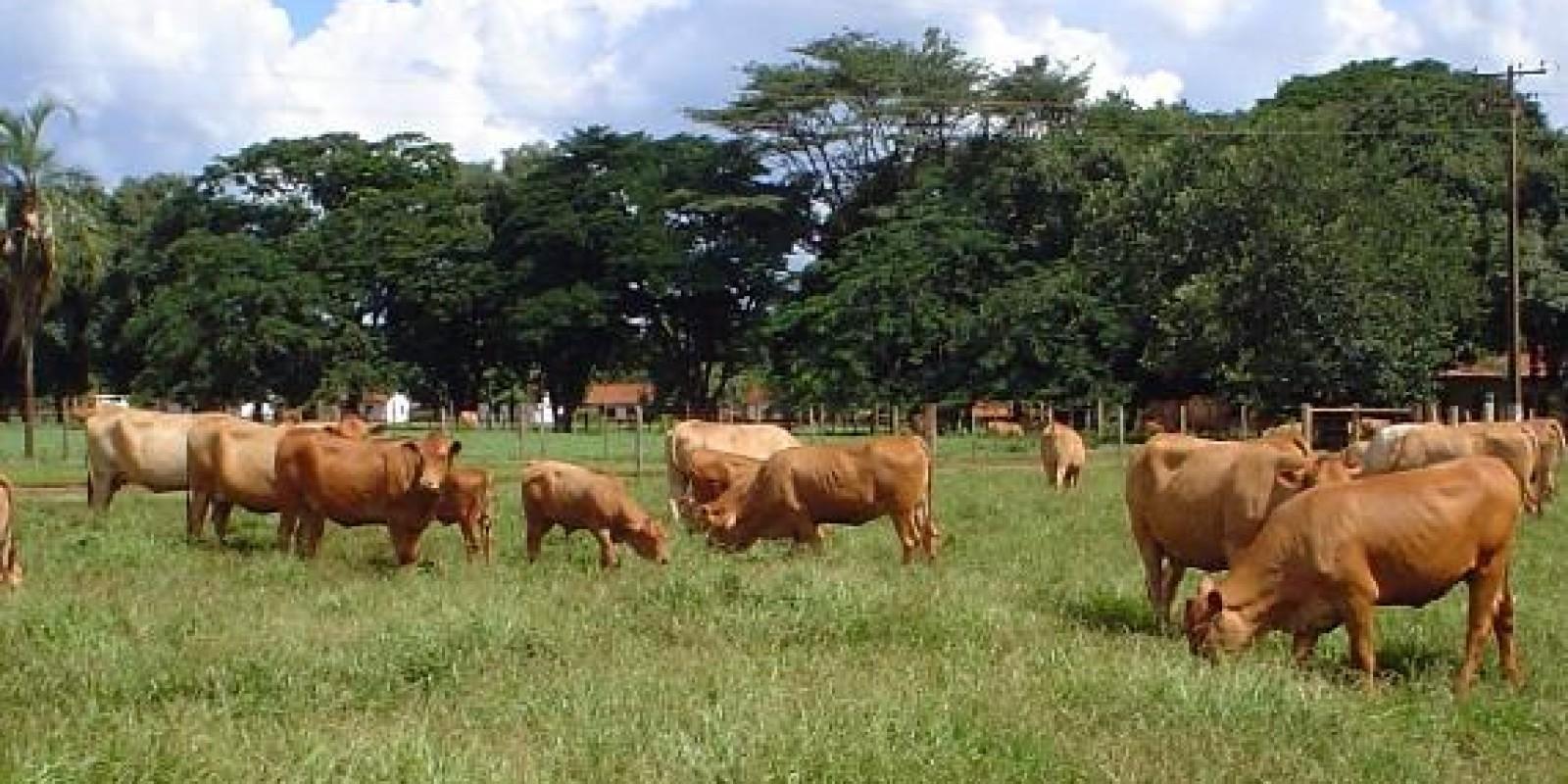 Instituto de Zootecnia quer decodificar genoma de animais adaptados ao clima tropical