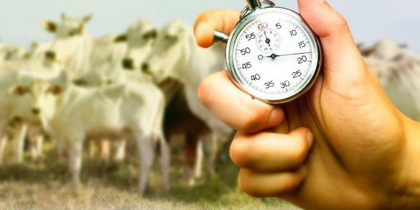 Escrituração zootécnica: como transformar dados em atitudes na fazenda?