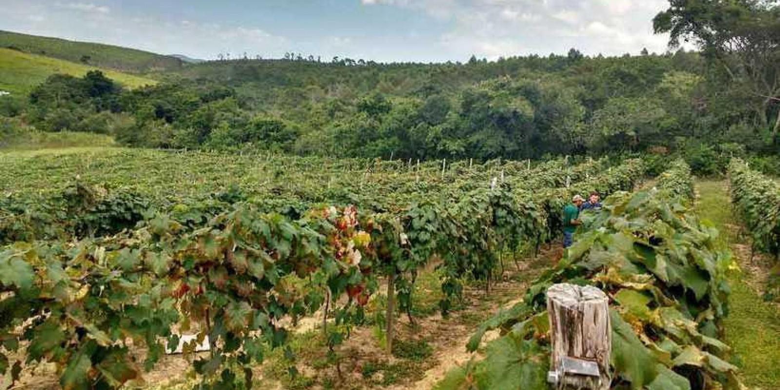 Fruticultura ganha vida nova em Minas Gerais