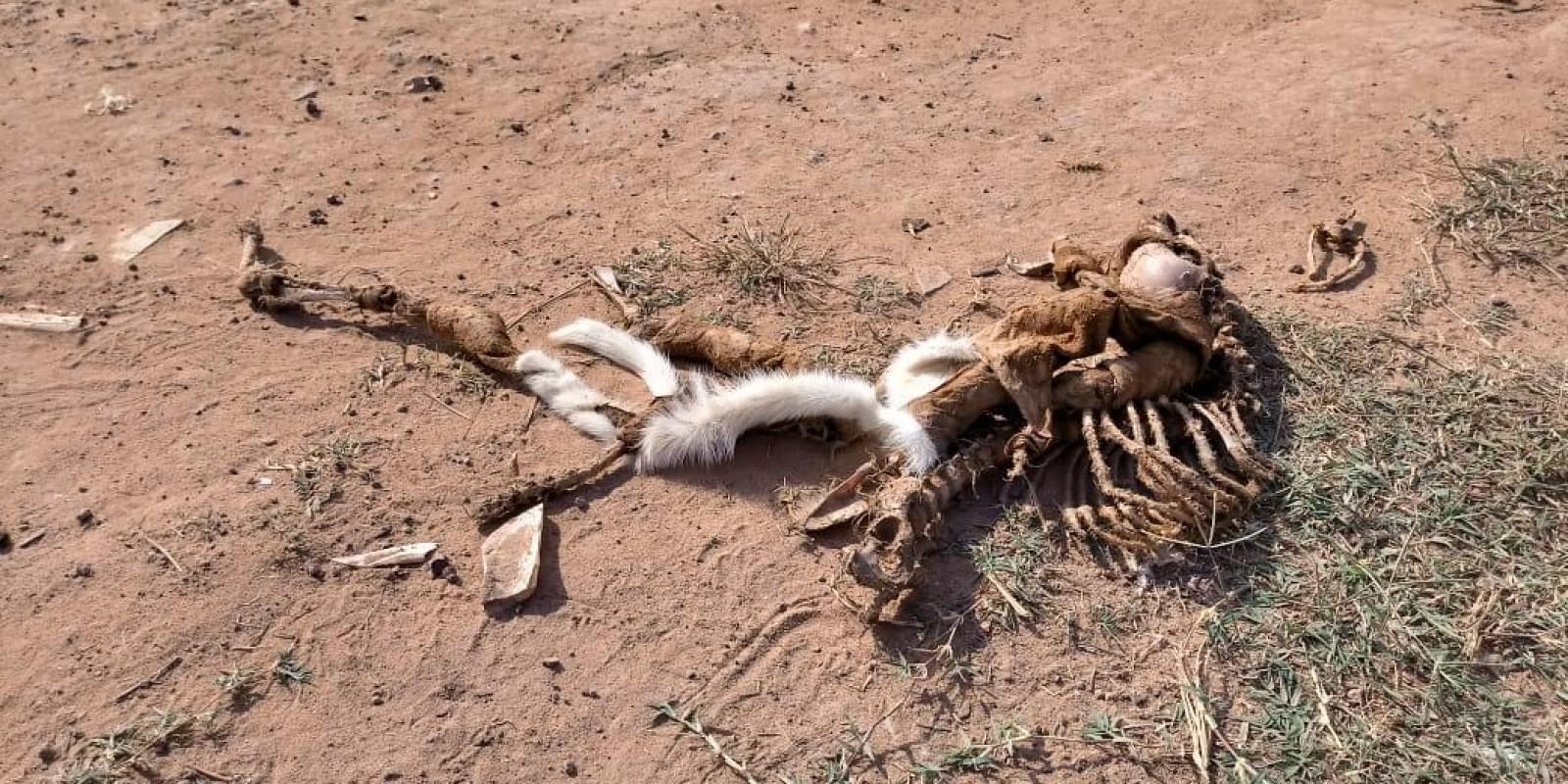 Agricultura abre consulta pública sobre destinação de animais mortos