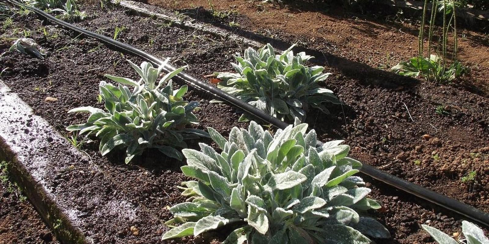 Encontro online discute Agroecologia no Vale do Piranga