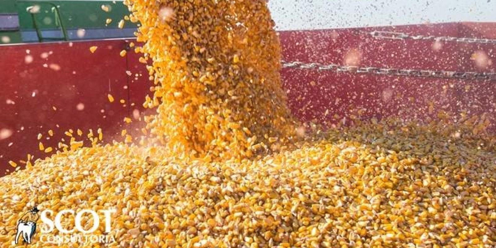 Milho: mercado firme e alta nos preços