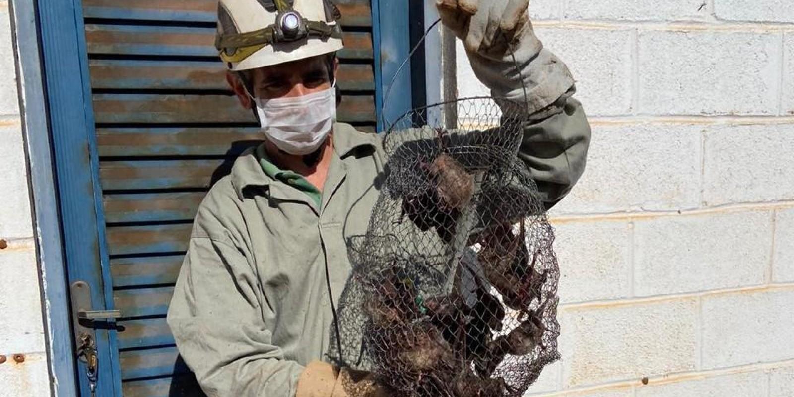 IMA realiza força-tarefa contra raiva animal em Minas